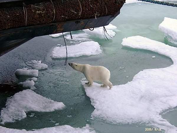 Arktyczna podróż atomowym lodołamaczem 11