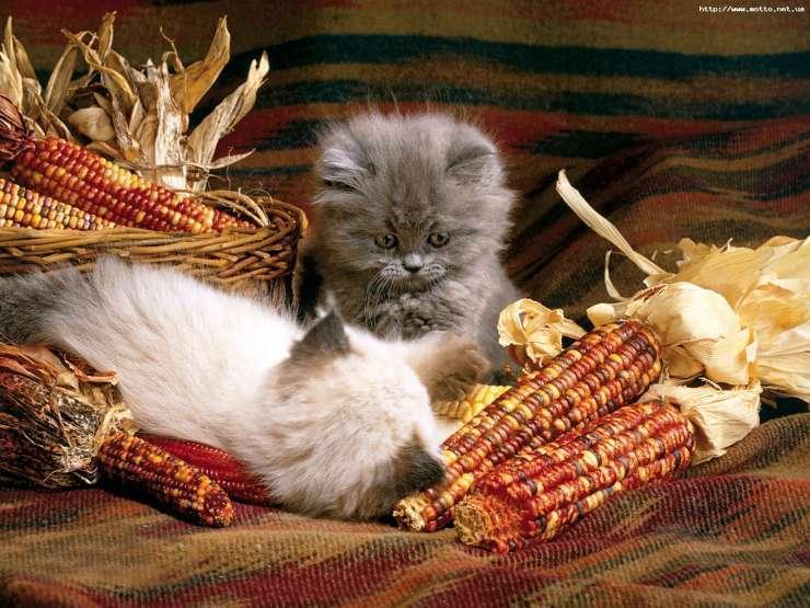 Małe kotki 19