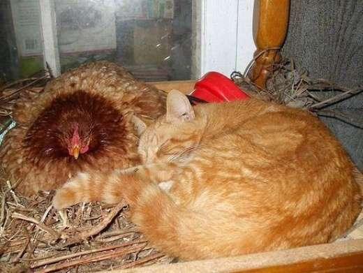 Rozpuszczone, leniwe koty 20
