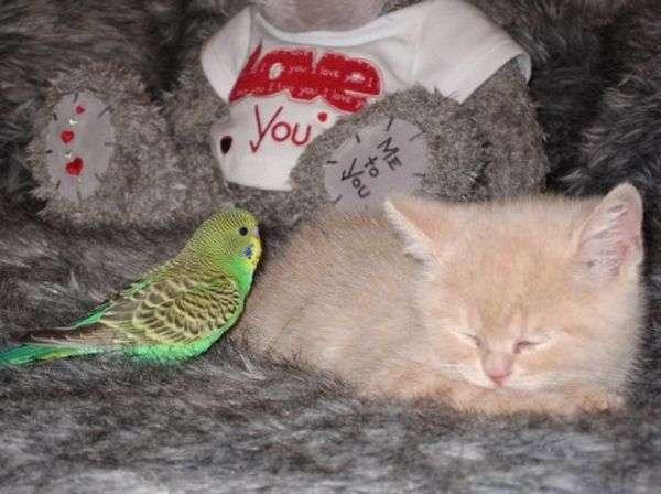 Kot i papuga 3