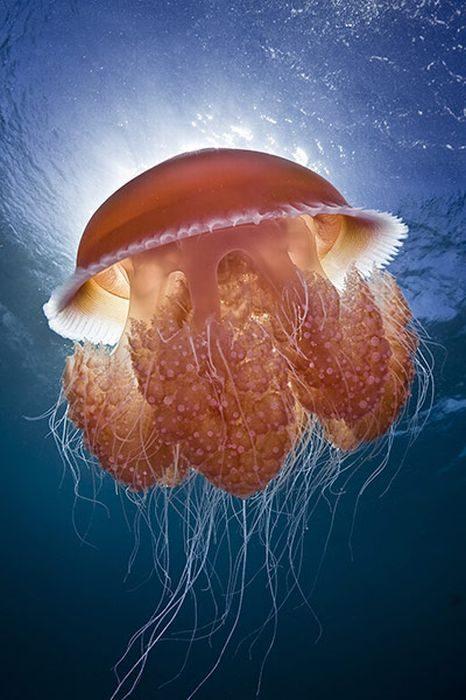 Podwodny świat 2