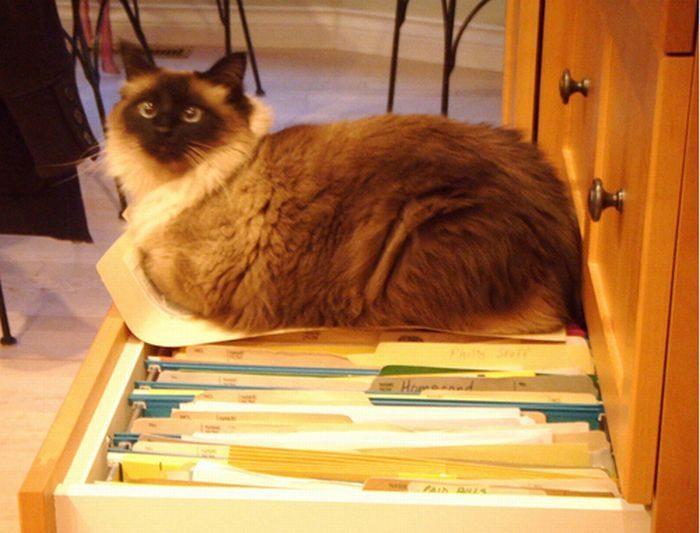 Jak przechowywać koty? 8
