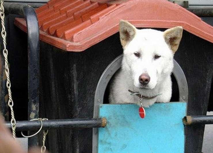 O psie, który jeździł... cysterną 1