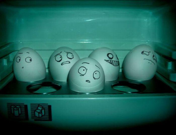 Sekretne życie jajek 49