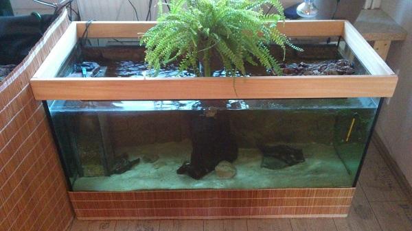 zeigt her eure aquarien wasser und sumpfschildkr ten page 6. Black Bedroom Furniture Sets. Home Design Ideas