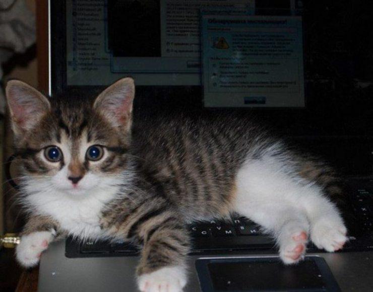 Koty uwielbiają komputery 19