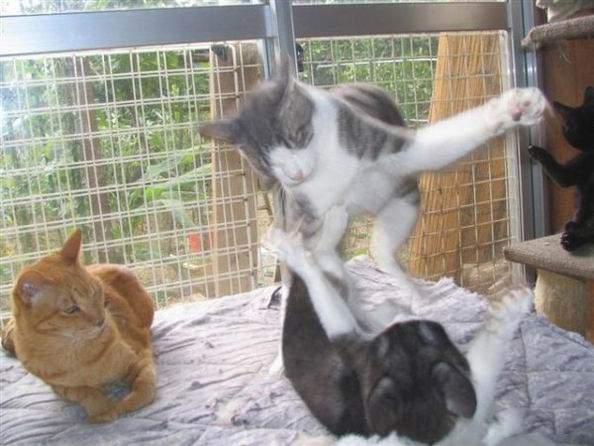 Śmieszne zdjęcia kotów #2 17