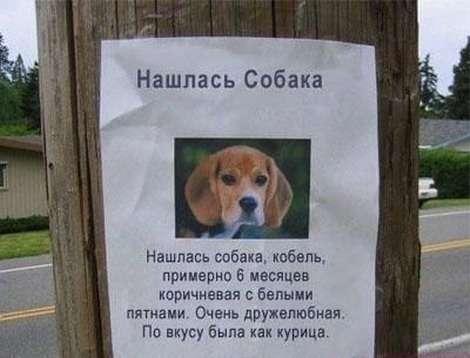 Śmieszne zdjęcia psów 1