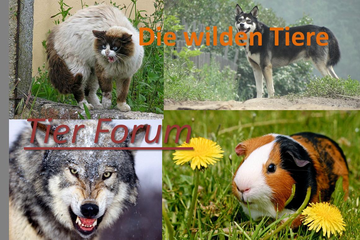 Tier Forum