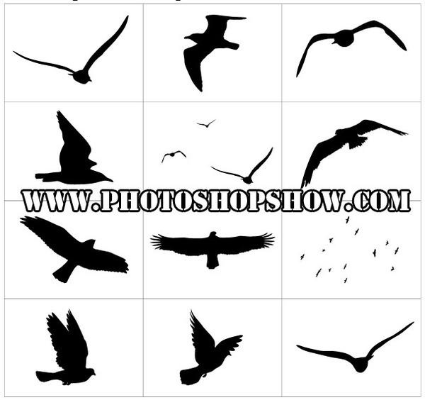 Harika photoshop kuş şekilleri indir