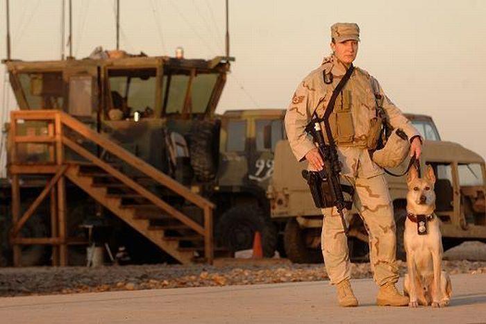 Psy wojskowe 19