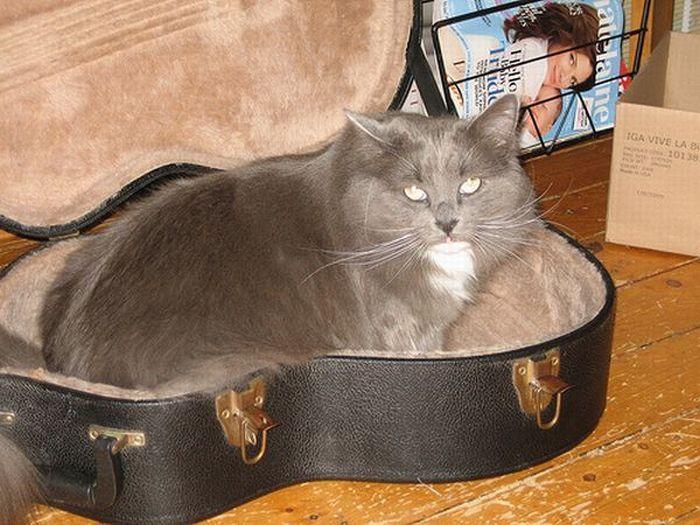 Jak przechowywać kota 19