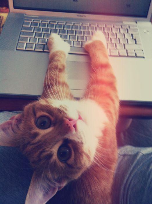 cat-laptopi7jt1.jpg