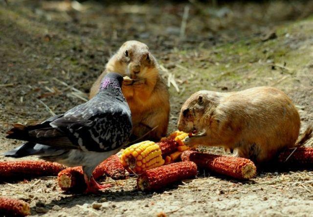 Śmieszne zwierzęta #7 7