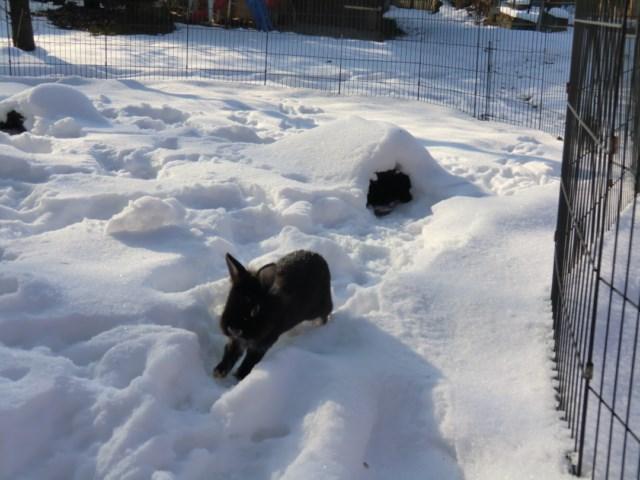 freunde nachbarn haben freilaufende kaninchen was tun seite 3 katzen forum. Black Bedroom Furniture Sets. Home Design Ideas