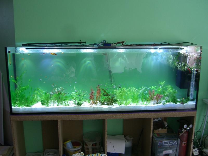 led beleuchtung f r 504l becken aquarium forum. Black Bedroom Furniture Sets. Home Design Ideas