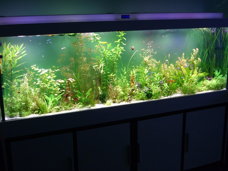 aquarium led beleuchtung led forum. Black Bedroom Furniture Sets. Home Design Ideas
