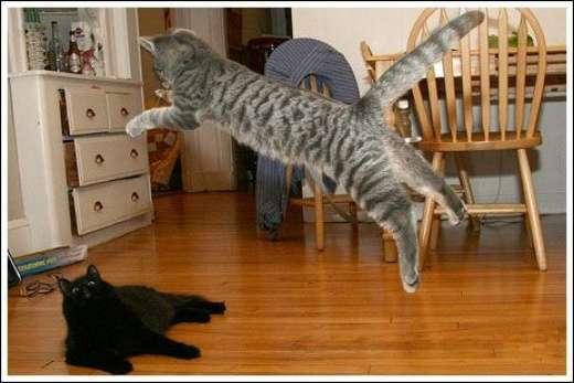 Kocie skoki 11