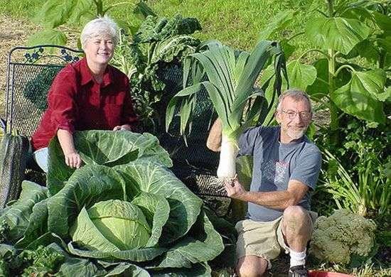 Warzywa giganty 6