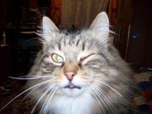Śmieszne zdjęcia kotów #2 3