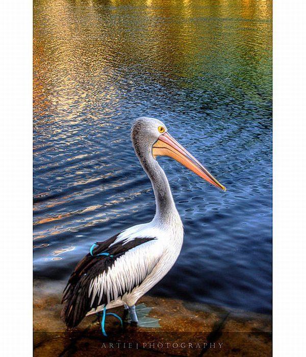 Zdjęcia zwierząt w HDR 21