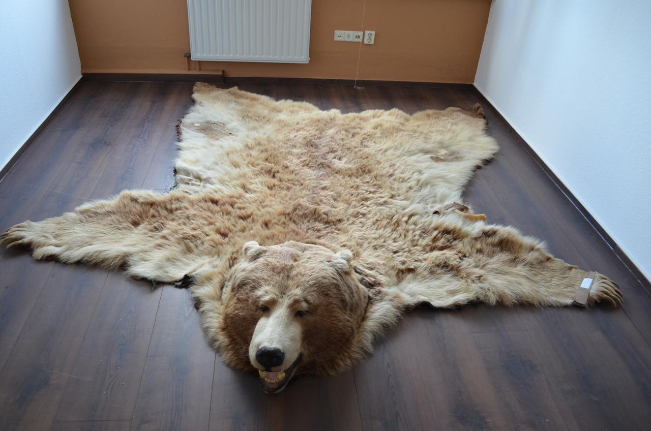 Echtes bärenfell kaufen