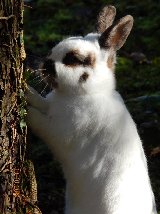 wie spielt man mit kaninchen