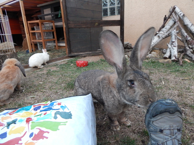 liebenswerte gartenzwerge seite 50 kaninchen. Black Bedroom Furniture Sets. Home Design Ideas