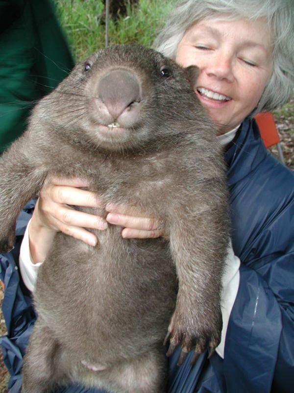 Wombat tasmański 6