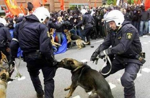 Policja z przymrużeniem oka 35