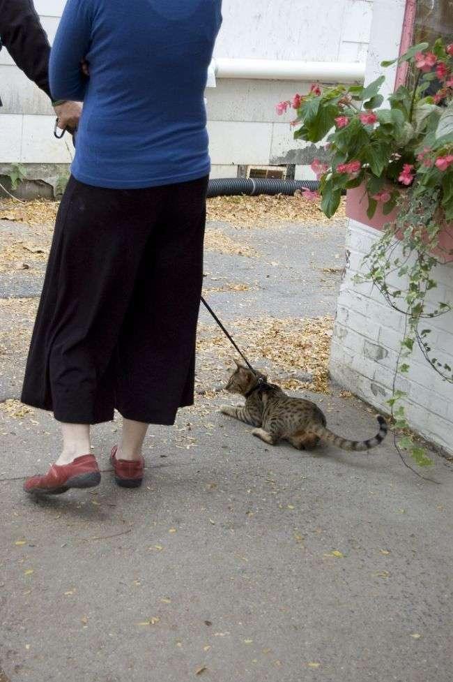 Koty na spacerze 36