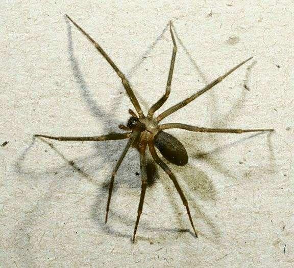 Ukąszenie pająka dzień po dniu 1