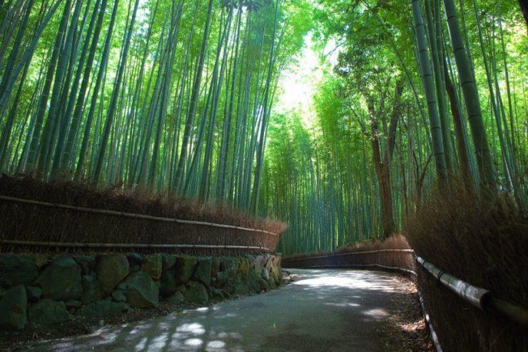 Las bambusowy 4