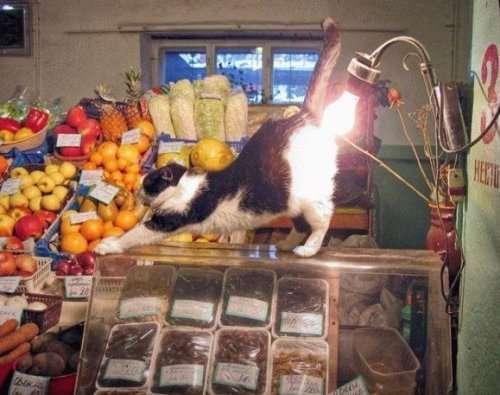 Zabawne koty 15