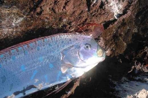 Dziwnie długa ryba 6