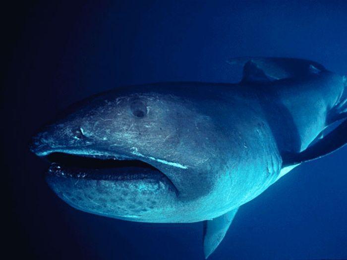 Przerażające rekiny 10