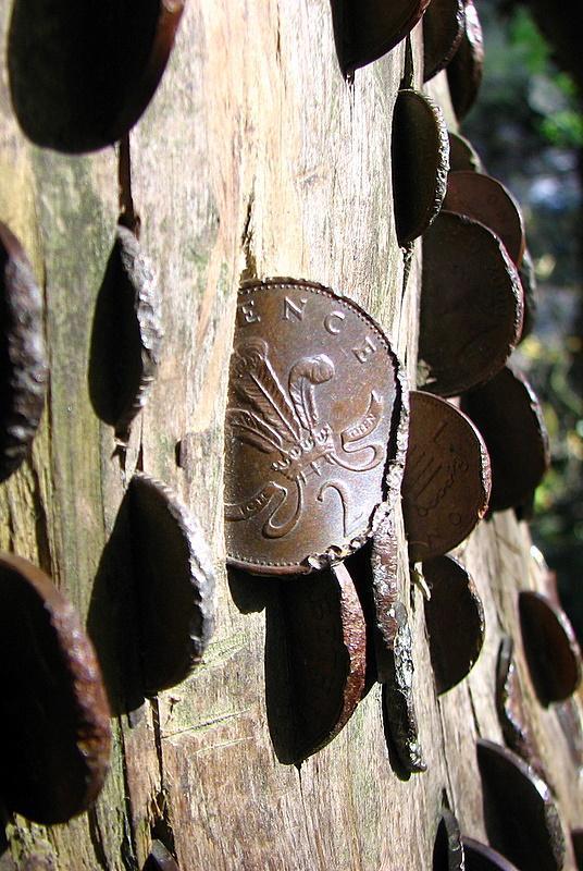 Drzewo życzeń 14
