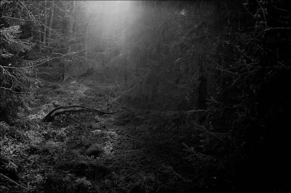 Tajemnicze lasy 31