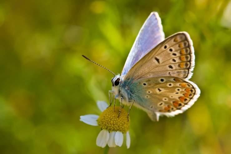 Makrofotografia: owady #2 4
