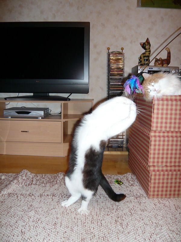 Koty, kociaki i kocury 42