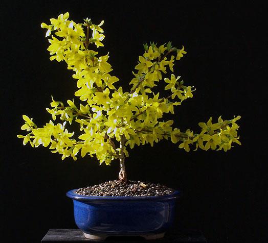 gibt es im forum bonsaifreunde seite 11 garten. Black Bedroom Furniture Sets. Home Design Ideas