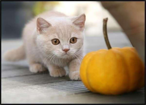 Koty 5