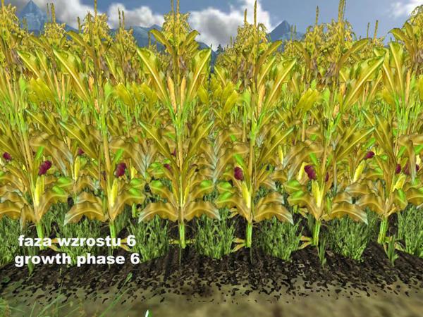 Fresh corn v1.0