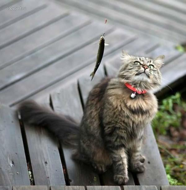 Śmieszne zdjęcia zwierząt #8 10