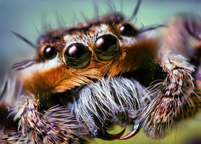 Makrofotografia - owady z bliska 22