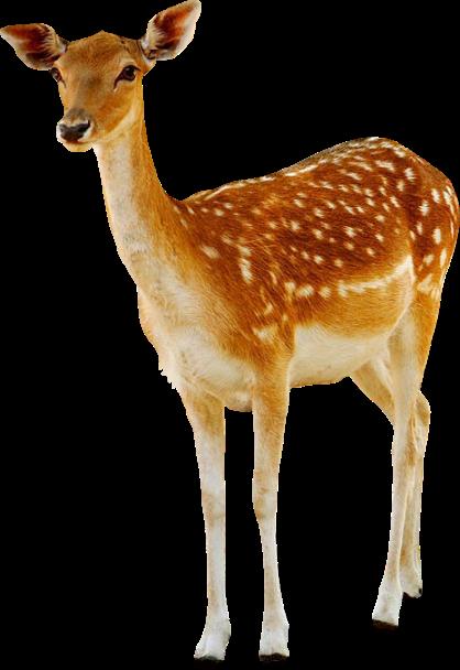 Geyik Png Resimler - Deer PNG image (set-1)