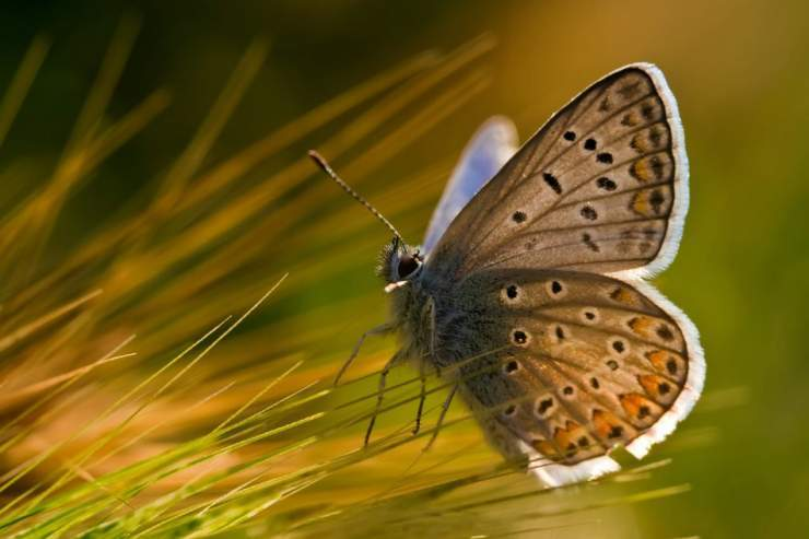 Makrofotografia: owady #2 6
