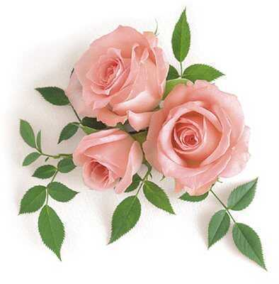 Маленькая открытка с цветами