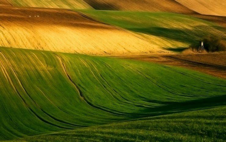 Magia zielonych pól 17