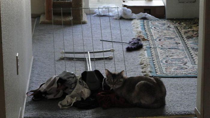 Nieznośne koty 31
